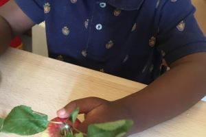 Accueil A : La pomme et sa compote